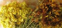 Какие травы следует принимать от паразитов в теле человека?
