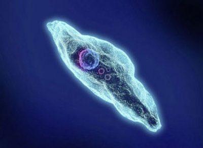 Определение паразита