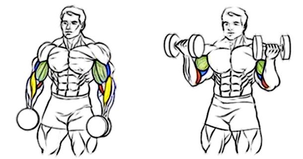 Упражнения для накачивания плеч в домашних условиях